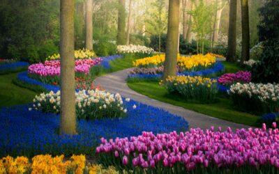 Top 10 Jardines  Copia